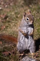 red spring squirrel feeder seeds