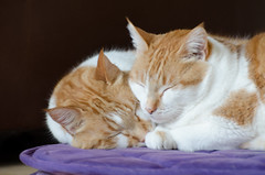 Napping Cats (C-Dals) Tags: cat nikon nap sleep nikkor 70300mmf4556gvr d5100 tp183