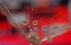 Speed Demon (water.drop .....( on & off )) Tags: red macro water car speed drop refraction bmw demon autocross racer