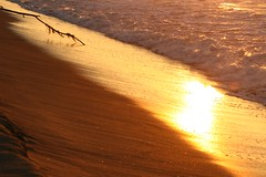 reflective glory - matsushima (xthylacine) Tags: ocean sea orange sun reflection tree beach water lines silhouette yellow japan sunrise canon asian japanese mar sand asia waves wave playa line diagonal tsunami amarillo callaway taiyo naranja matsushima miyagi hcallaway xthylacine