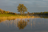 Woodhall Loch (.Brian Kerr Photography.) Tags: trees light scotland loch galloway ☆thepowerofnow☆ woodhallloch
