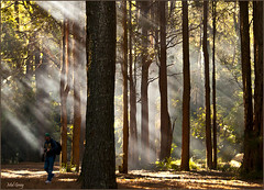 Bathed in light_DSC7314 (Mel Gray) Tags: trees forest ambientlight australia newsouthwales watagans hunterregion treesdiestandingup