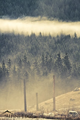 Once Upon A Time (AlpineEdge) Tags: trees cloud canada misty fog forest outside scary meadow spooky layers stratified fogy cloudlayer threedeadtrees