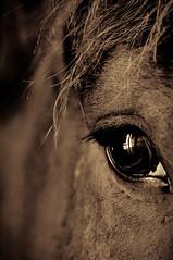 it's all in the way you look at it. (Deb Ebbeling) Tags: horse rock farm massachusetts bottom belgian deb 2012 stow rockbottom theseareafewofmyfavoritethings ebbeling rockbottomfarm