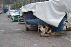Minori (ELENA TABASSO) Tags: cats cat viaggi minori