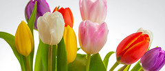 Tulips-1.jpg (Patti Houston) Tags: flowers floral botanical tulips greenery bouquet sping