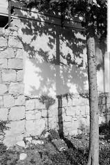 May16_62_FP4_D_Canonet17_24 (jamin.sandler) Tags: jerusalem 200 diafine fp4 canonetgiiiql17