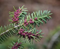 (daveumich) Tags: trees cabin michigan upperpeninsula