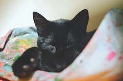 IMG_20160514_202401 (Nicholas Williams Swift) Tags: sleeping pet sun black love sol colors cat bag puppy relax nikon sleep negro kitty ears colores molly gata siesta mascota gatita mochila durmiendo catlover nikond5100