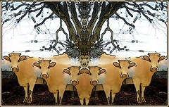 Hi From April & the Girls (Joe Vance aka oliver.odd - running in Safe Mode) Tags: trip light abstract color art geometric face bike lady happy eclipse cows space surreal cycle tripping fractured