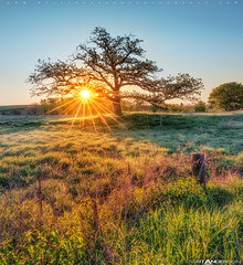 Prairie Tree Sunrise #2 (Matt Anderson Photography) Tags: uk morning usa sun sunlight plant tree nature field grass vertical fog wisconsin rural sunrise landscape outdoors photography dawn us spring character yorkshire country scenic nopeople growth blanket remote grasses backlit ferns idyllic sunbeam scenics clearsky albion tranquilscene copse 2016 colorimage moodysky mattanderson roomforcopy horizonoverland otherkeywords zzzpics wisconsinshadow