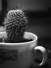 Cute Cactus Cup (Avintiquin) Tags: bw white black film pen utah kodak olympus frame half ft pan analogue slc f18 rodinal expired zuiko plusx 38mm avintiquin