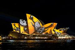 Vivid 2016 (shashin62) Tags: light colour festival sydney vivid australia nsw operahouse lunarpark vivid2016