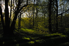 * (vieubab) Tags: arbres atmosphre bois branchage branches calme chemin couleurs extrieur fort feuillage feuille goldenhour luminosit lumire levdujour lumirediffuse nature ombre paysage sentier troncs