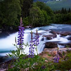 No wind in Norway (*hassedanne*) Tags: flowers water long exposure wind 10