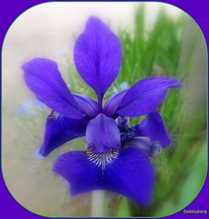 (Kay Harpa) Tags: iris thebiggestgroup parenthse entredeux ponctuation photokay