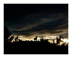 Toro. Carretera A-2, 2013. (diazdeburgos) Tags: road viaje landscape spain carretera paisaje toro a2