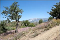 Landscape (Mabacam) Tags: mountain mountains nature walking landscape outdoors countryside spain view hiking country andalucia trail moorish vista 2016 sayalonga canillasdealbaida