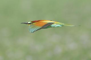 Kuwait's Birds