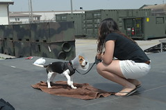 Pet Fest - U.S. Army Garrison Humphreys, South Korea - 5 May 2012
