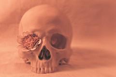 flower skull cross (TheOtherPerspective78) Tags: red orange flower lensbaby skull cross retro human processing bones bloom bone cranium blume blte vanitas mensch knochen schdel lensbabycomposer theotherperspective78