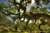 Nap Time (Andrew E. Larsen) Tags: california papalars andrewelarsen