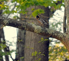 080 (Daniele_Sharpe) Tags: nature birds spring wildlife newhampshirehiking nhwildlife