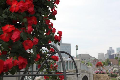 花盛りのバラ園