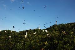 Cayo de las aves (raitana_mora) Tags: brasil venezuela gaviotas morrocoy garzas fragatas lamisión jupdike emorricone