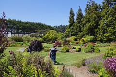 2012-05-26 05-28 Mendocino County 035 Fort Bragg, Mendocino Coast Botanical Gardens