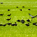 20120529_RICE BLOGS AND SEEDING 0967 Online copy