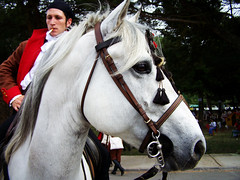 100_7034 (mls2012) Tags: horse caballo burgos lerma representacion tropas francesada