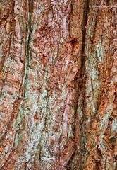 Tree Tree Trunk Detail [II] (Modesto Vega) Tags: abstract colour detail tree texture nikon treetrunk d600