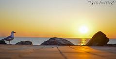 Unforgettable Sunset (yhan.lacerda) Tags: sunset bird beach australia adelaide southaustralia
