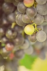 #grapes #Green #photobyme #photography #photo (giulia.dusi) Tags: green photography photo grapes photobyme