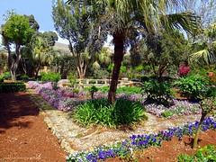 Palazzo Parisio & Gardens in Naxxar, Malta (jackfre2) Tags: city flowers trees plants caf beauty gardens island malta splendid naxxar palazzoparisio palazzoparisiogardens insideterrace