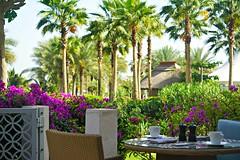 Breakfast Terrace At The Ritz Dubai (pam's pics-) Tags: flowers breakfast hotel flora dubai lodging uae arabia tropical ritzcarlton tropics unitedarabemirates bouganvilla fivestarhotel pammorris pamspics sonya6000