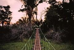 untitled. (rwed) Tags: travel bridge sunset sun film beach latinamerica trekking costarica playa hike corcovado jungle t5 drake peninsula isla yashica osa centralamerica drakebay