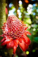 IMG_0096.jpg (Michele Stocco) Tags: hawaii gardenofeden 2016 mauiroadtohana