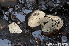 Oil Coated Rocks (Greenpeace USA 2016) Tags: oil spill pipeline fossilfuel ventura california pollution cleanup crude ca usa