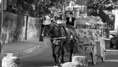 Howdy! Wanna ride? (apopoetic) Tags: texas nikond5300 nikonphotography horse chariot cowgirl hat antonio summer 2016 outdoor