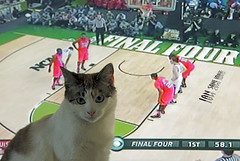 Remember Me? (Ian Sane) Tags: me sports television basketball cat ian four tv feline remember view or images line tournament final feed else ncaa nala blocking cbs defiant foul sane the my of mens