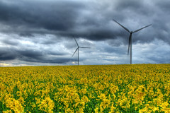 Wind 117/366 ([inFocus]) Tags: nottingham sky cloud storm field weather canon wind year dramatic rape 7d 365 drama tone turbine hdr nottinghamshire windturbine 2012 mapped 24105 366 photomatix project366