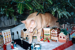 (Tiigra) Tags: pets events 1996 scan presentation date 50 edit murka birthdayv 0status mediagenre
