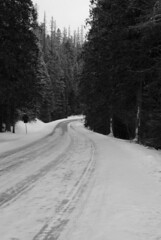 Going-to-the-Sun Road (dr-scott) Tags: winter sky blackandwhite usa mountain snow tree nature forest blackwhite nationalpark montana glaciernationalpark