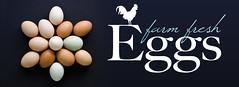 Egg Poster: web banner (Indiana.Matt) Tags: brown chicken farm egg trafalgar indiana orchard eggs fresheggs blueeggs appleworks farmfresh whiteeggs chickeneggs theappleworksorchard