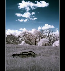 Solitary Branch IR (Phil 'the link' Whittaker (gizto29)) Tags: clouds p93 ir sony infrared modded falsecolours 630nm khromagery scotsbogwood strutherwood pontoplowwood bonnerswood