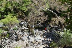 2012-05-06 Sunol Regional Wilderness Park 041 Canyon View Trail, Little Yosemite