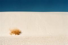 DUNE-SIDE (ALKALI SACATON GRASS) (La Branaro) Tags: mamiya nc1000 nc1000s slr film rollei rolleidigibasecn200 rolleicn200 newmexico whitesands whitesandsnationalmonument nationalpark desert gypsumdesert whitedesert alkaliflatstrail alkaliflats hiking deserthiking spring gypsumsand newmexicodesert dune grass drygrass alkalisacaton desertgrass