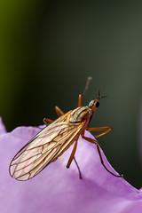 Noch ein Insekt auf dem Rhododendron (Foto_Michel) Tags: orange blur macro tiere fly blume insekt garten auge fliege violett fhler